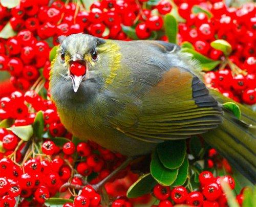 Красивые и забавные фото птиц (2 часть) (45 фото)