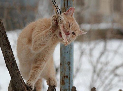 Забавные котейки (30 фото)