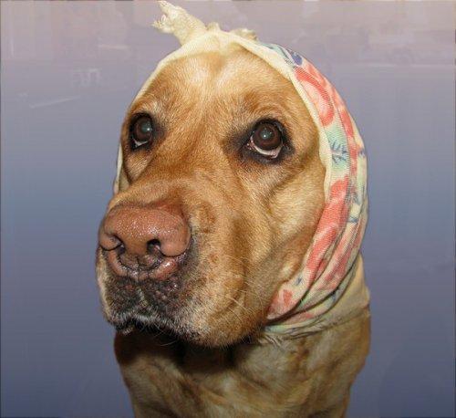 Позитивные собачки (35 фото)