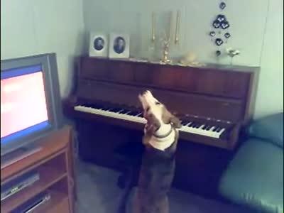 Музыкальная собачка