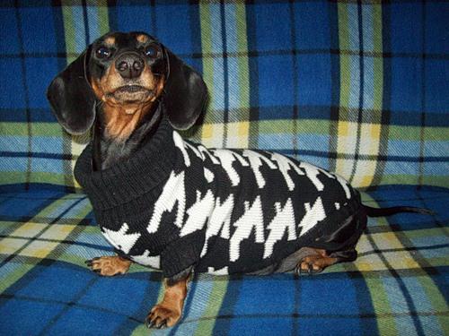 Весенняя колекция для собак  (30 фото)