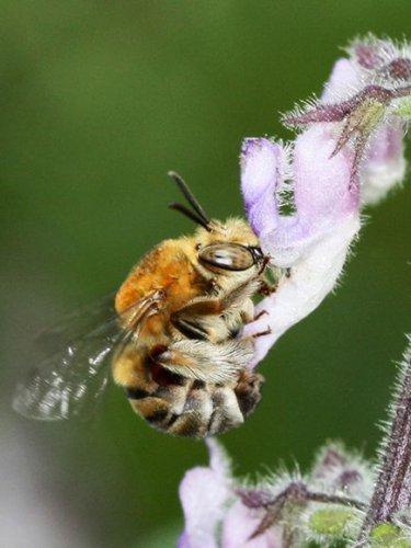Личная жизнь насекомых (8 фото)