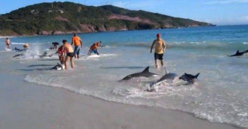 В Бразилии туристы спасли 30 дельфинов