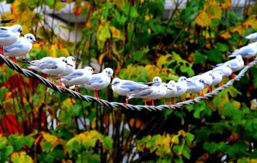 Красивые и забавные фото птиц (3 часть) (45 фото)