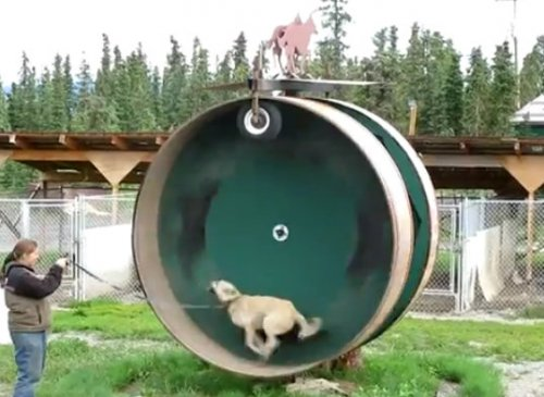 """Как собака в колесе"""
