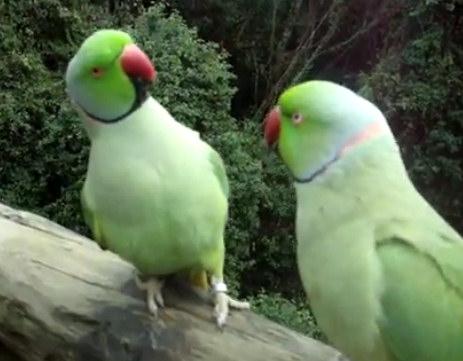 Позитивные птички