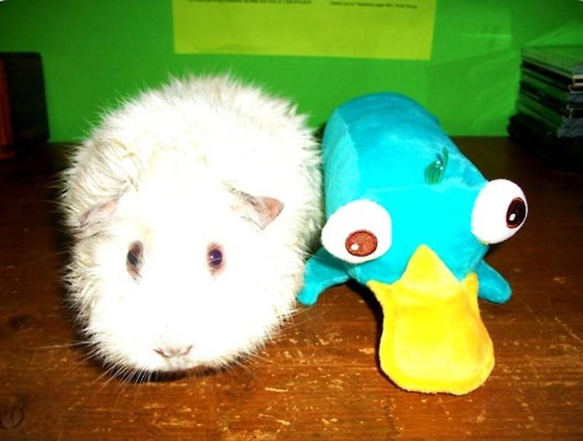 Милые зверушки и их игрушки самое
