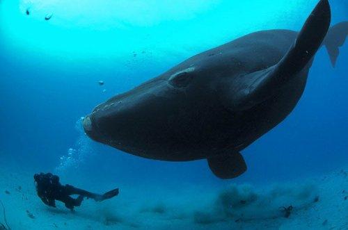 Cамое большое существо на земле - Синий кит (12 фото)