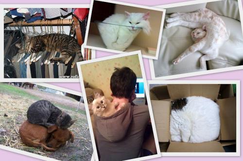 Спящие котики (14 фото)