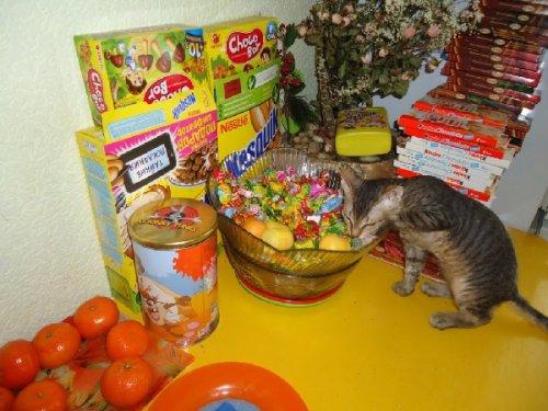 Сплошной позитив от кошек (35 фото)