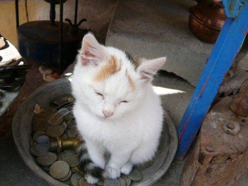 Умилительные фото котят (60 фото)