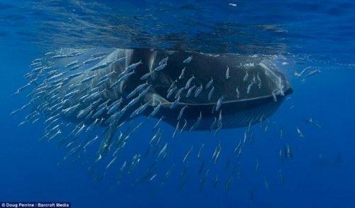 Дайвер чуть сам не стал добычей для кита (7 фото)