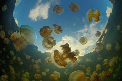 Озеро медуз (16 фото)