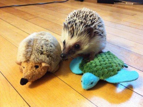 Милые зверушки и их игрушки (30 фото)