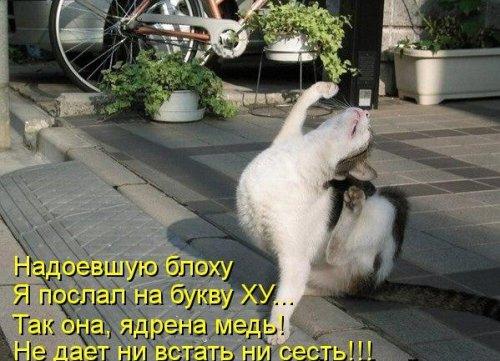 Весёленькая котоматрица (30 фото)