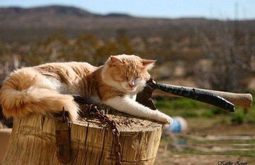 Спящие кошки (36 фото)