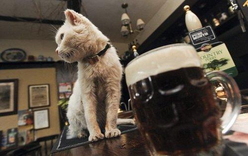 Кошка-долгожительница любит пиво (3 фото)