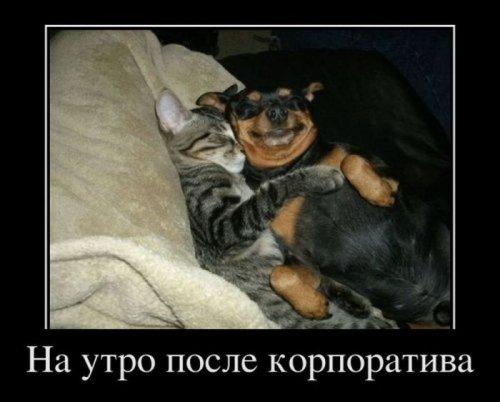Демотиваторы с участием животных (25 фото)