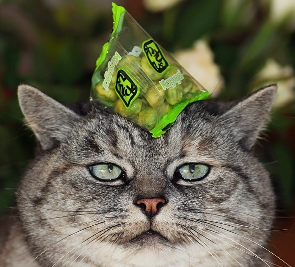 Кошки → ох уж эти кошки 35 фото