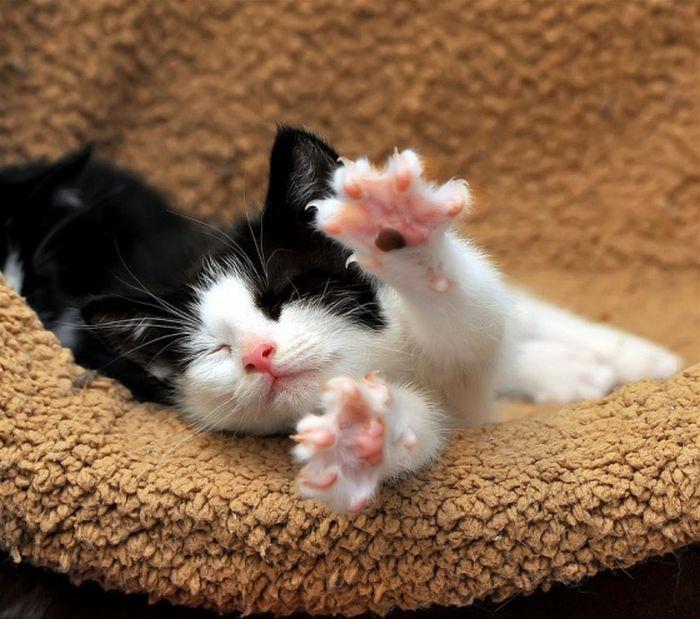 Милые картинки с котятами и надписями