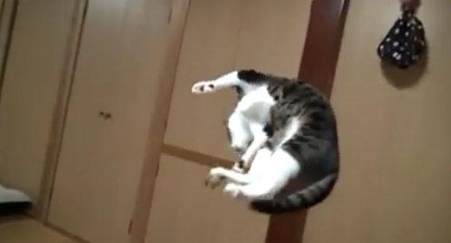 Коты акробаты