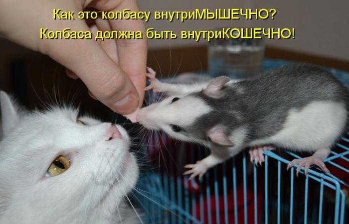 Котики с надписями смешными про мышек до слез, открытках