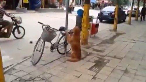 Как в Китае собаки охраняют велосипеды своих владельцев