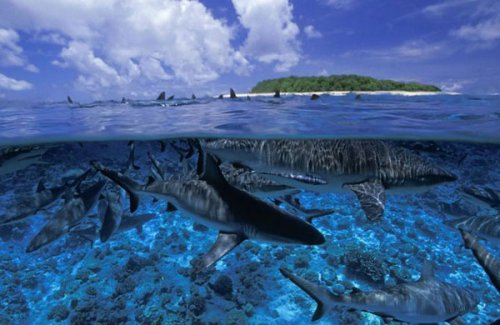 Удивительные снимки подводных обитателей (9 фото)