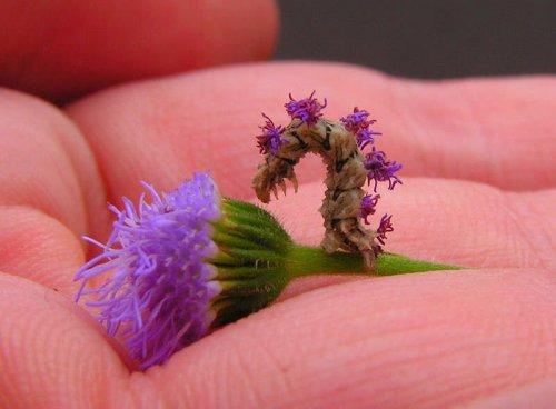 Гусеница - цветок (10 фото)