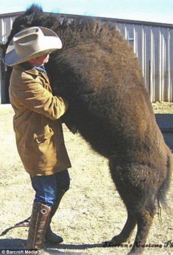 'Заклинатель быков' и его домашние питомцы (17 фото)
