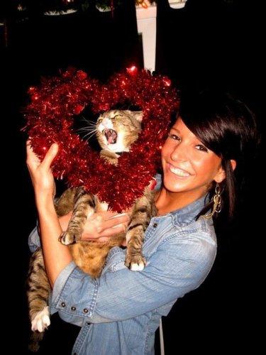 Забавные Кошки Коты Котята (30 фото)