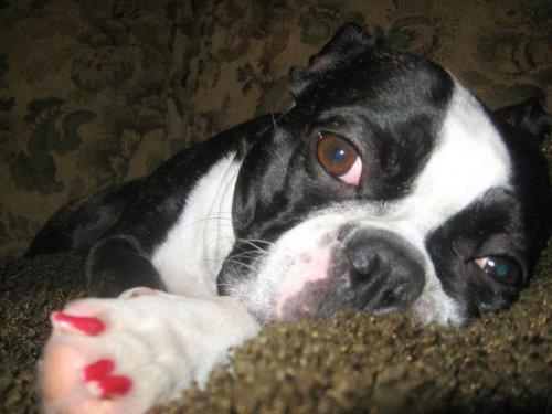 Самые большие собачьи глаза в мире (11 фото)