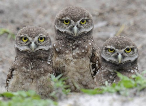 Фотографии животных из мировых новостных лент (20 фото)