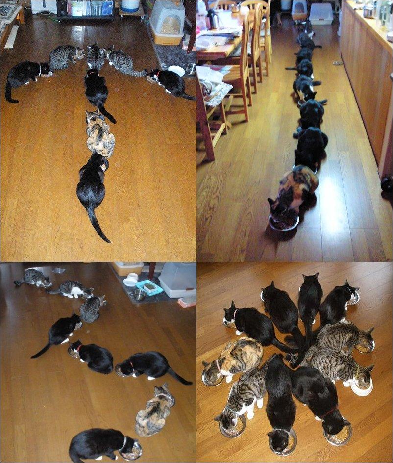 Кошачий завтрак:) (3 фото)