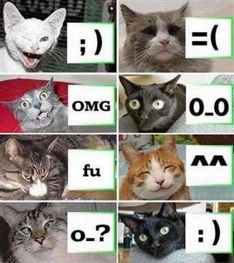 Юмор: Один день из жизни кота