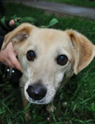 Одесские волонтеры помогли собаке-инвалиду
