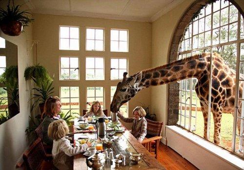 Отель - Поместье Жирафа (14 фото)