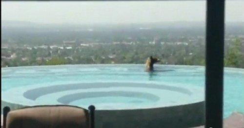 В Калифорнии медведь принял освежающую ванну в частном бассейне