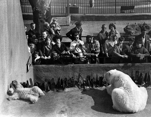 Животные в чёрно-белых фото (29 фото)