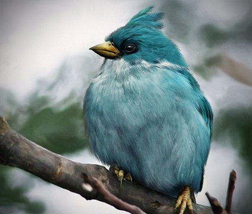 Сердитые птички (Angry Birds) художника Мохамеда Рэуфа (8 фото)