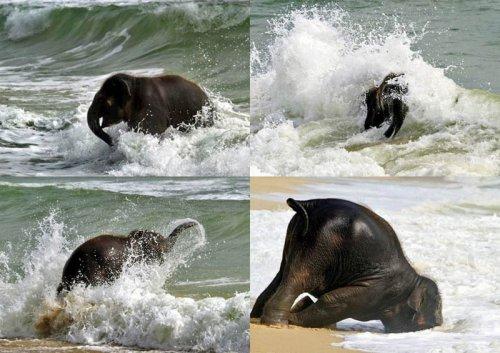 Очаровательные слонята (32 фото)