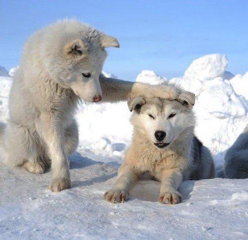 Позитив от животных (35 фото)