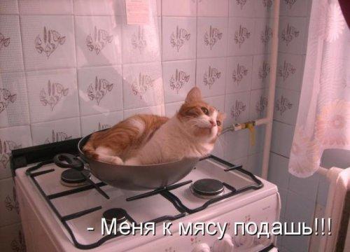 Забавная котоматрица (35 фото)