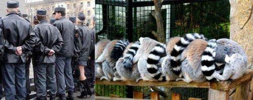 Не далеко ушли от животных:) (25 фото)