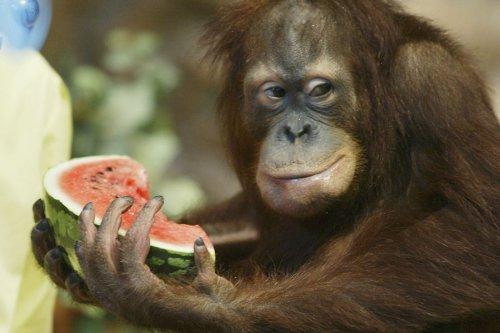 Животные любят арбузы (20 фото)