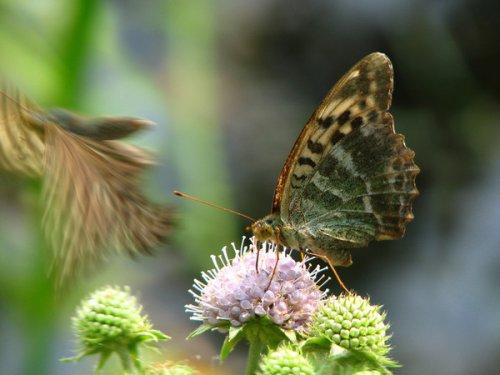 Красавицы лета (25 фото)