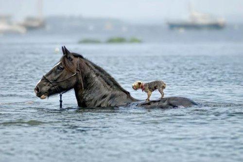 Эти смешные и забавные животные (30 фото)
