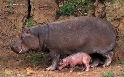 Мир дикой природы от Марины Кано (21 фото)