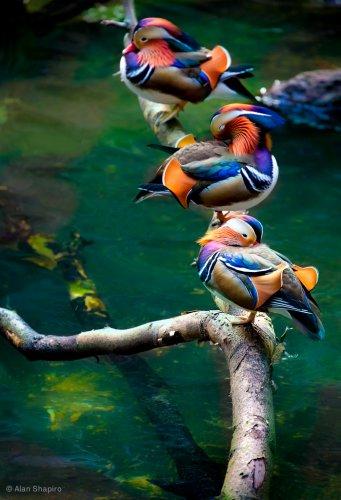 Поделка природы (5 фото+видео)