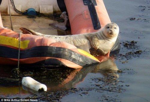 Позитивный тюлень (4 фото)